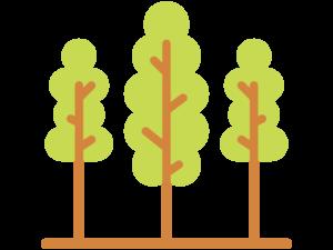 Šumarski program